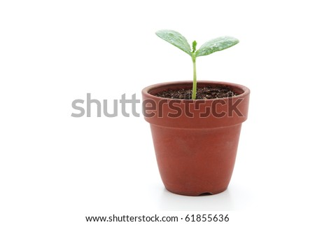 Young plant in small flowerpot - stock photo