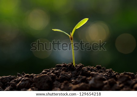 young plant in the morning light - stock photo