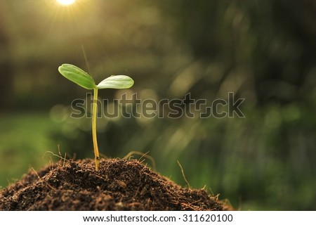 Young plant in the morning light. - stock photo