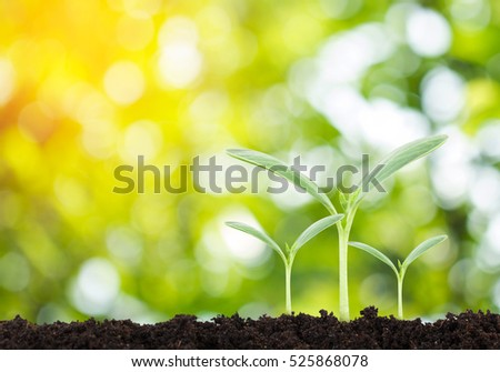 Young plant in the morning light on nature background, New life concept