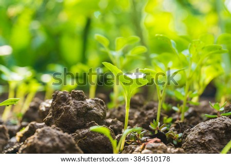 Young plant in the morning with sun light, Insect eye level - stock photo