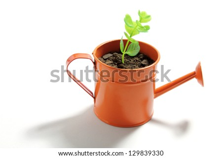 Young Plant in Watering Can on White Background - stock photo