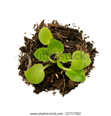Young plant isolated on a white background