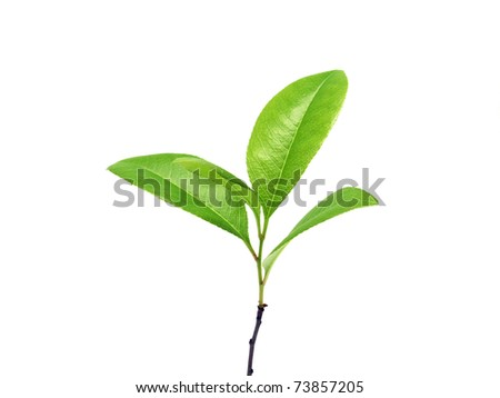 Young plant isolated on the white - stock photo