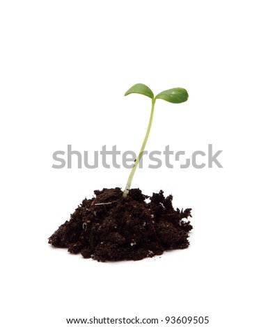 Young plant isolated on white background