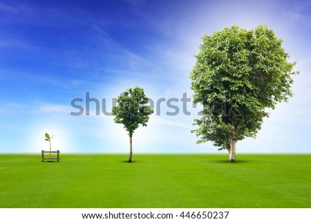 young plant life process from small to medium size and growing up to growth big tree business concepts business life office