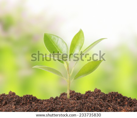 young plant new life ,Green sapling  - stock photo