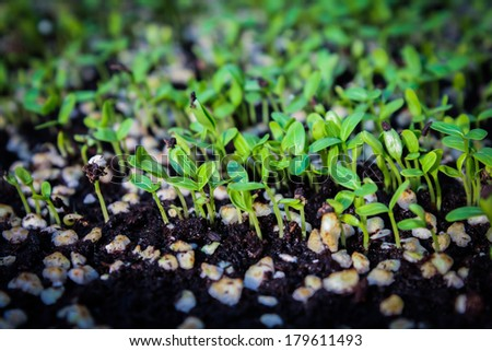 young plant new life, Many young seedlings