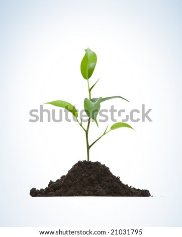 Young plant on light background