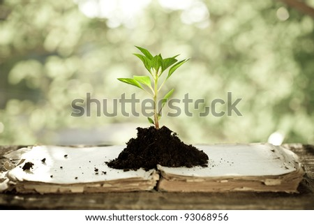 Young plant on old book against spring natural background. Ecology concept - stock photo