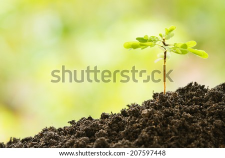 Young plant on the ground in breed season - stock photo