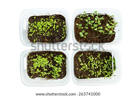 Young plant seedlings in a tray, isolated on white - stock photo