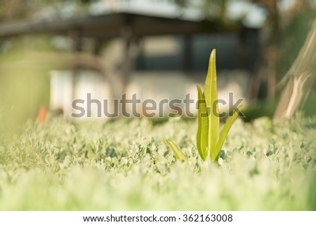 Young plant showing ecology growth or nature concept. - stock photo