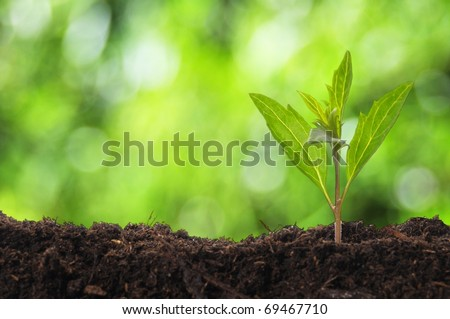 young plant showing ecology growth or nature concept with copyspace - stock photo