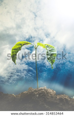 Young Plant Struggling for Life with Sky After The Storm . Ecology concept. World Environment Day concept. Hope concept - stock photo