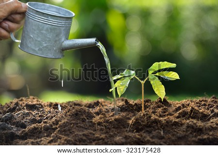 Young plant watered from a watering can - stock photo