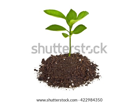 Young plant with humus isolated on white background - stock photo