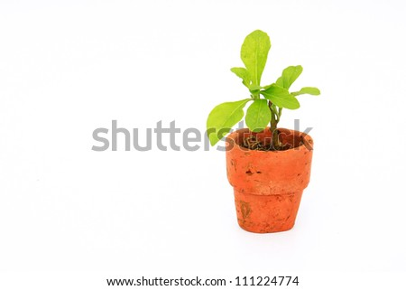 Young plant with small flowerpot on white background - stock photo
