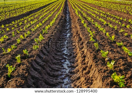Young plants growing in a french field - stock photo