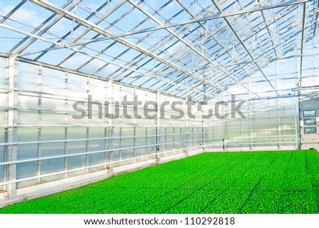 Young plants growing in a very large plant nursery in Norway - stock photo