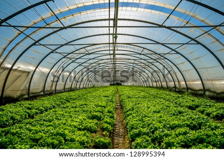 Young plants growing in a very large plant nursery in the france - stock photo