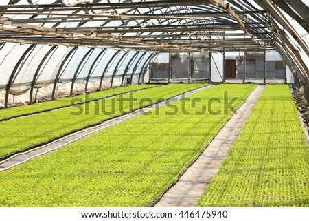 Young plants growing in greenhouse