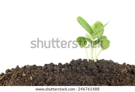 Young plants growing  on soil against white background