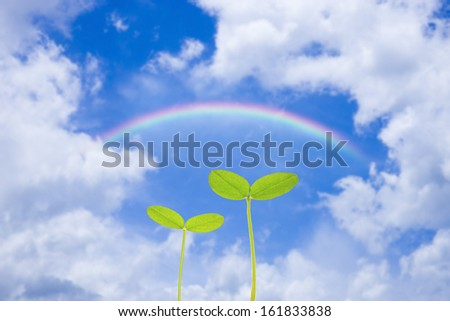 Young plants growing under the cloudy sky with rainbow - stock photo