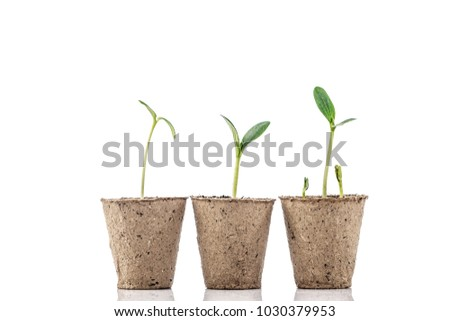 Young plants in a peat pot isolated on white background