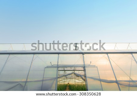 Young plants in greenhouse - stock photo