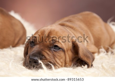 Young pretty dogs portrait - stock photo