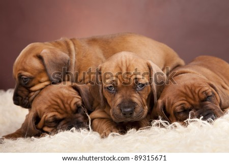 Young pretty dogs portrait - stock photo