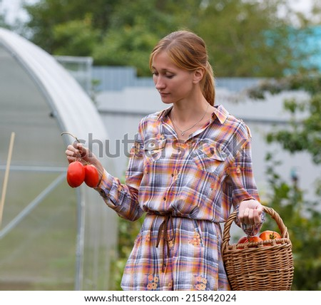 Young pretty woman picking tomatoes in her garden - stock photo