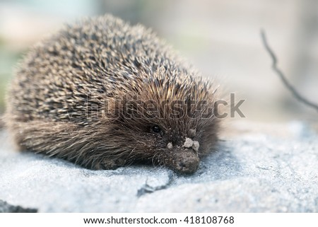 Young prickly hedgehog in their natural habitat - stock photo