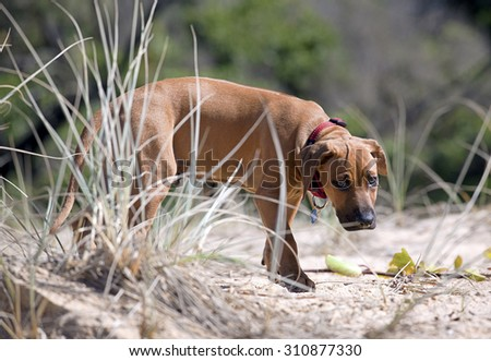 young pup playing on the beach - stock photo
