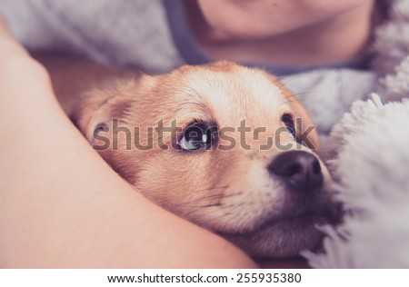 Young Puppy with New Family Member  - stock photo