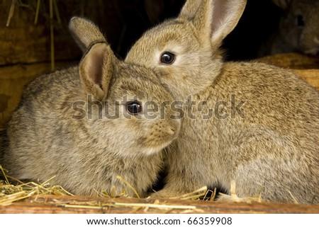 Young rabbit animal, farm and breeding - stock photo