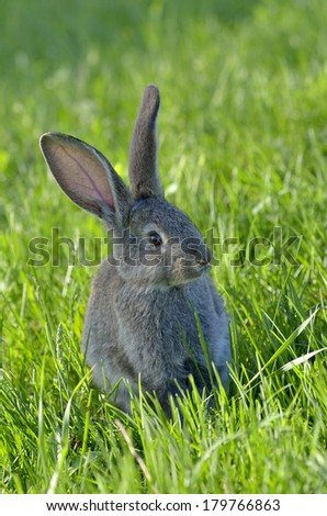 Young rabbit on grass