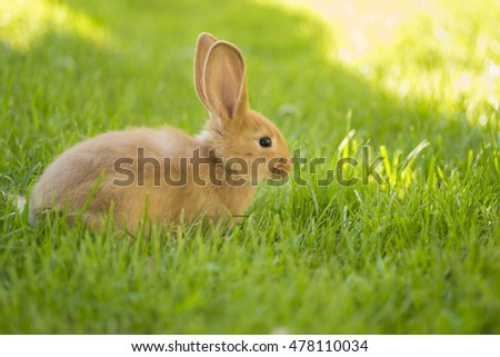 young rabbit on the green grass