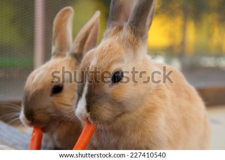 Young rabbits eating carrot - stock photo