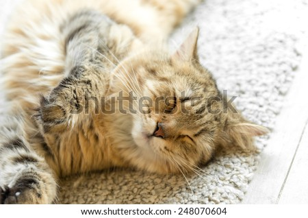 Young red cat sleeping with eyes closed - on white rug - stock photo