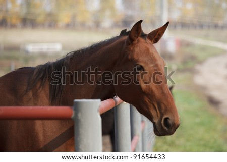 Young red horse in the paddock autumn day - stock photo