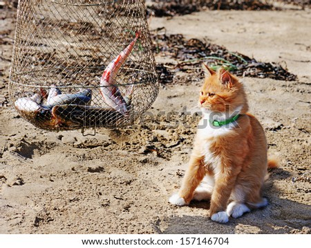 Young red maine coon and fish. Outdoor portrait. - stock photo