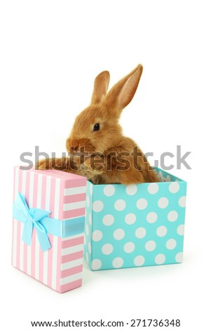 Young red rabbit in gift box  isolated on white - stock photo