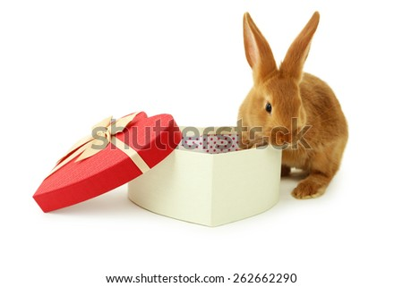 Young red rabbit near gift box  isolated on white - stock photo