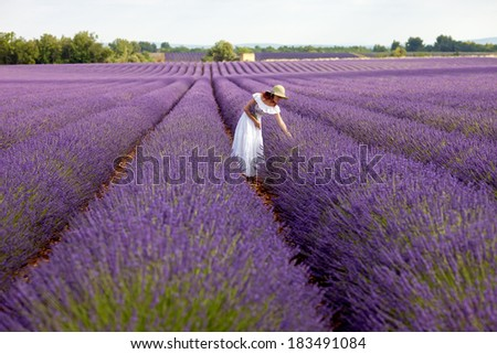 Young romantic woman picks some lavender from purple lavender field. In white dress with hat, in her hand a bouquet of lavender, sky above visible. Overview photo. - stock photo