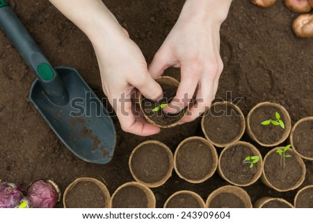 Young Seedlings in jiffy pots - stock photo
