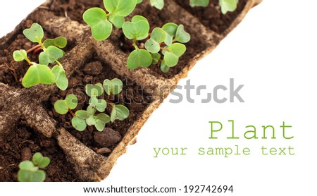 Young seedlings of radish in tray close up - stock photo
