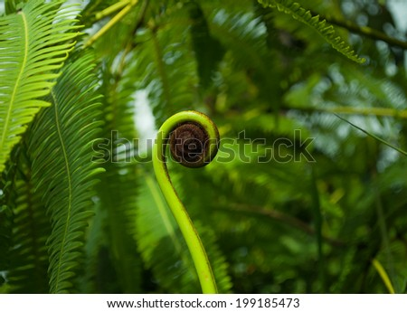 Young shoot of fern in jungle