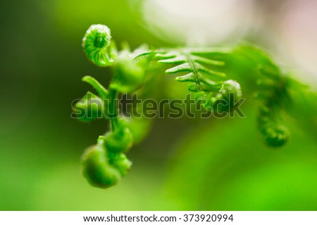 Young shoot of  the forest fern - stock photo